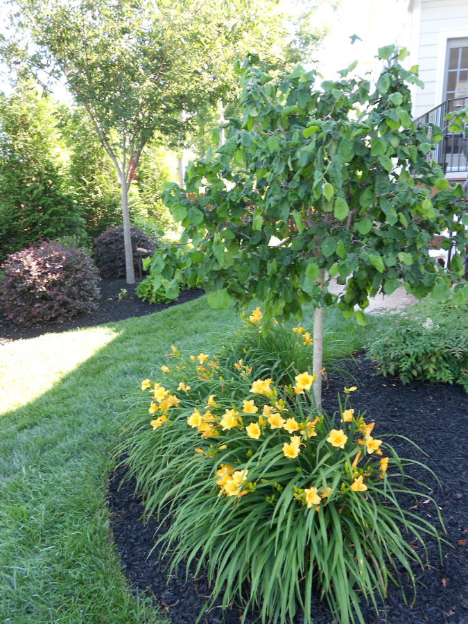 Landscaping Ideas For North Carolina together with Drought Tolerant Landscaping Ideas furthermore Landscape Design moreover Back Yard Patio Design Ideas In Florida furthermore Hosta Flower Garden Design Ideas. on small drought tolerant yard ideas