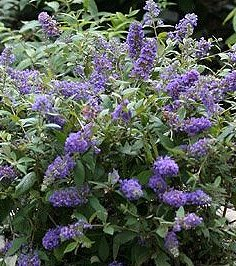 Raleigh Landscaping, Raleigh Landscape Contractors, Raleigh Garden Designers, Garden Design, Raleigh Landscapers, Landscaping, Pollinator Gardens, Pollinators, Pollinator Plants, Butterfly Bush