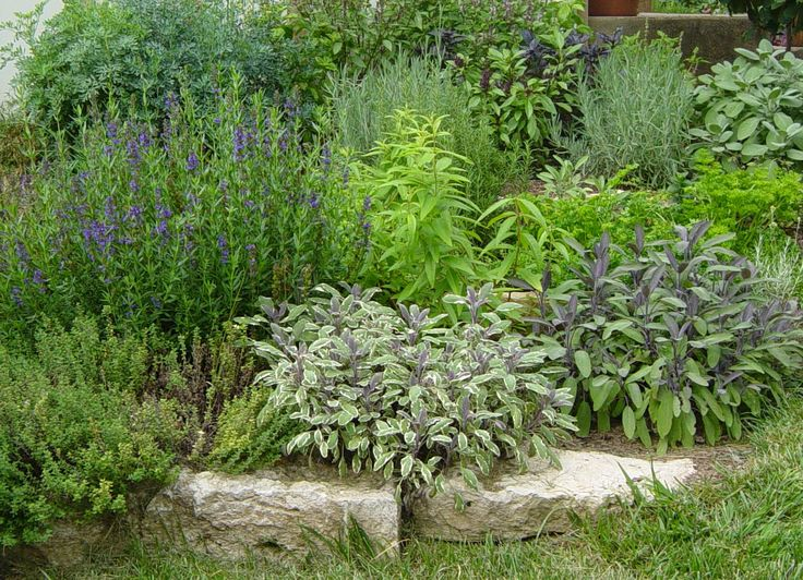 Raleigh Landscaping, Raleigh Landscape Contractors, Raleigh Garden Designers, Garden Design, Landscaping, Insects, #Raleigh Garden Design, #Raleigh Landscaping, early spring, Tomato, Tomatoes, Vegetable Gardens, Figs, Edible Gardens, Blueberries