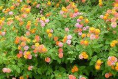 raleigh landscaping; raleigh garden design