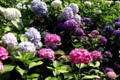 A Water Wise Garden to Beat Summer's Heat
