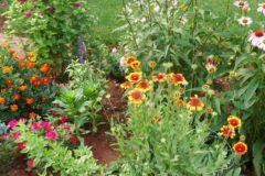 Revive and Rejuvenate For More Flower Power