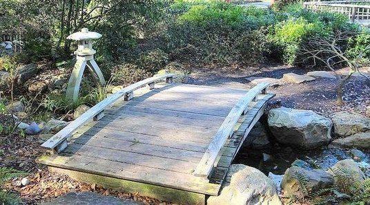 Raleigh Landscaping, Raleigh Landscape Contractors, Raleigh Garden Designers, Perennials, Fall Bloomers. Early Fall Bloomers, Fall Gardening, Japanese Gardens, Moon Bridge, Japanese Lantern