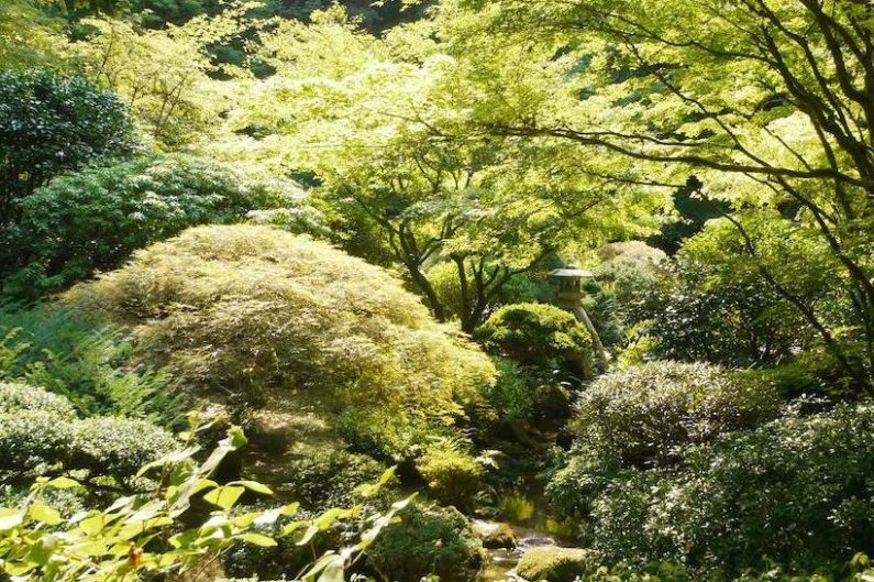 Raleigh Landscaping, Raleigh Landscape Contractors, Raleigh Garden Designers, Perennials, Japanese Gardens, Moon Bridge, Japanese Lantern