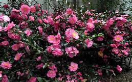 Raleigh Landscapers, Raleigh Landscaping, Raleigh Landscape Design, Garden Design, Raleigh Garden Design