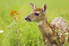 Hang on for Deer Life!