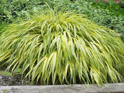 forrestgrass