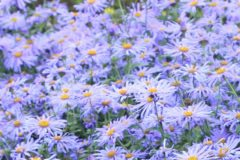 Pollinator Gardens