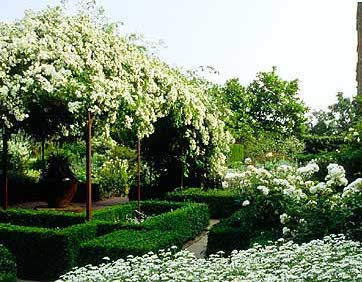 Raleigh Landscaping, Raleigh Landscape Contractors, Raleigh Garden Designers, Garden Design, Raleigh Landscapers, Landscaping, Pollinator Gardens, Pollinators, Fragrant Flowers, Scents of Spring, Scents of Summer, Senses, Sensory Gardens, Moonlight Garden, Moonlight, Moon Garden, Snowball Viburnum, Natchez Crape Myrtle