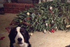 O' Christmas Tree….How Sustainable You Are!