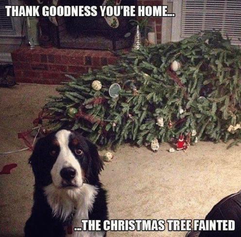 Christmas Tree, Christmas, Christmas Tree Recycling, Holiday, Sustainability, Christmas Tree Farms