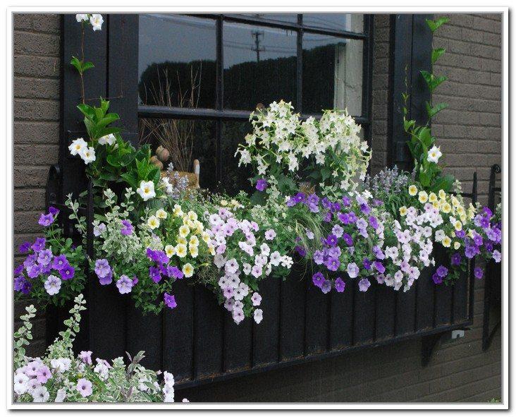window-box-plants-for-winter